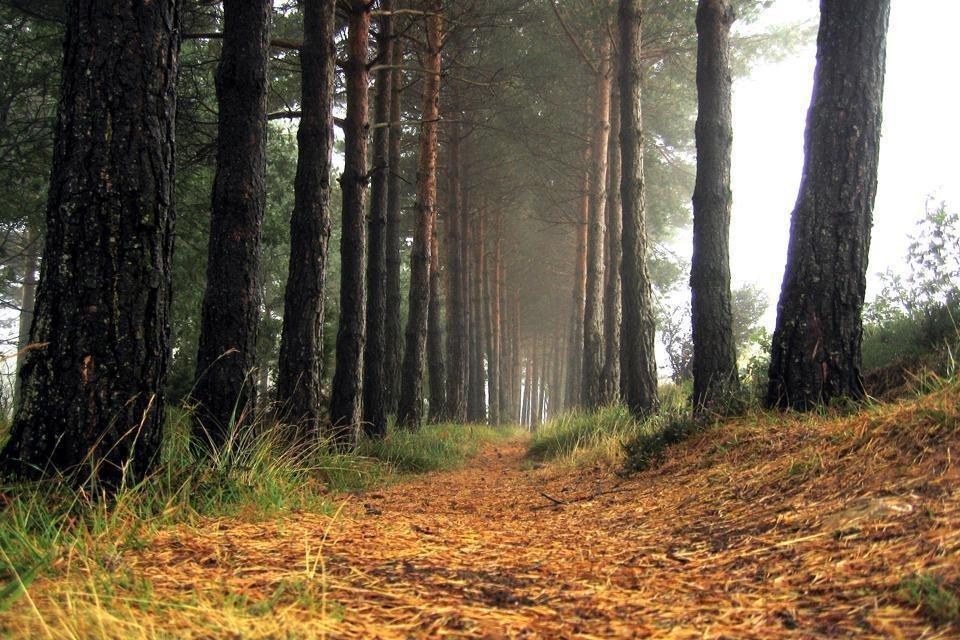 Bosque encantado (ceremonia de sonido) 18 Aug '18, 14:00