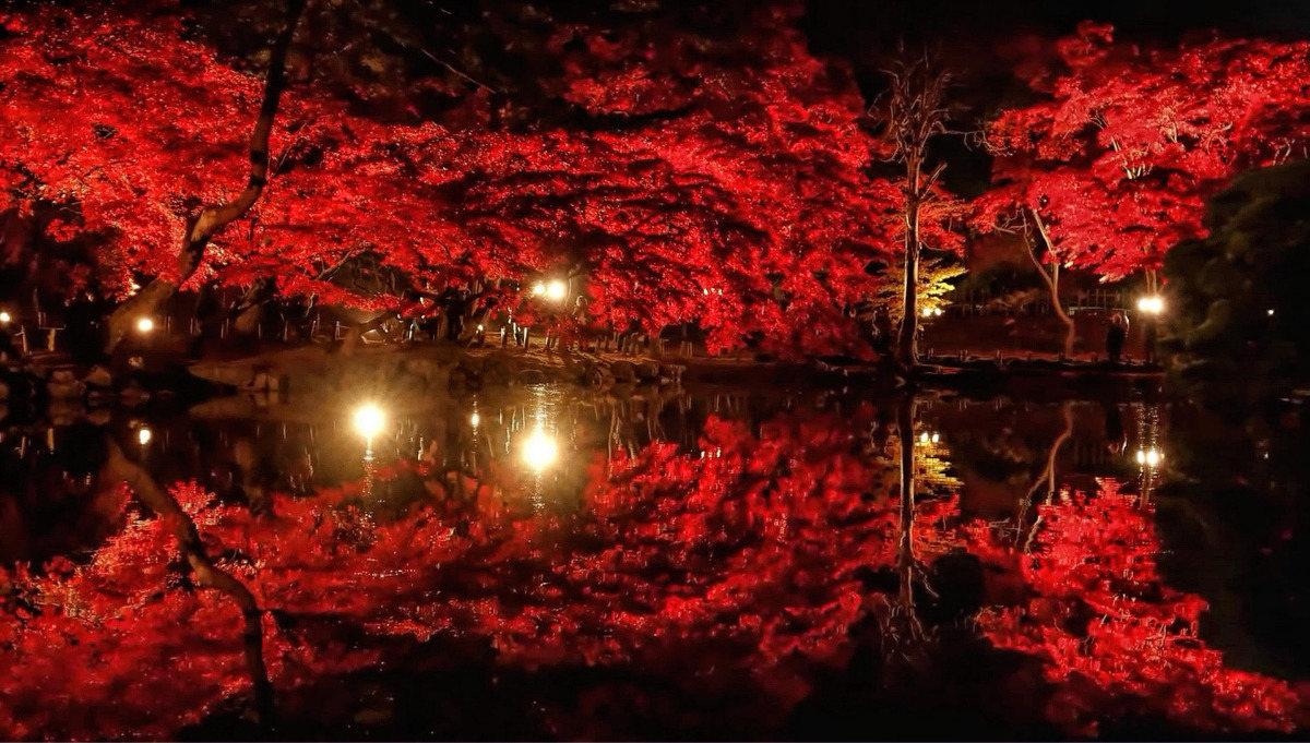 Roter Lichtbaum 9 Mar '19, 18:00