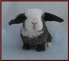 Party flyer: Beats Down The Rabbithole IV 28 Jan '17, 22:00