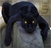 Tec Panther